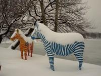 2 Zebras in Duisburg, Dreieickswiese am Stadion